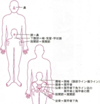 人体相関図