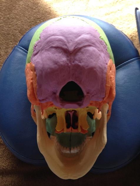 下から見た頭蓋骨